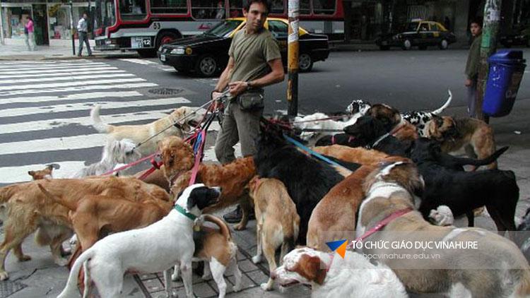 Không được dắt nhiều chó cùng 1 lúc